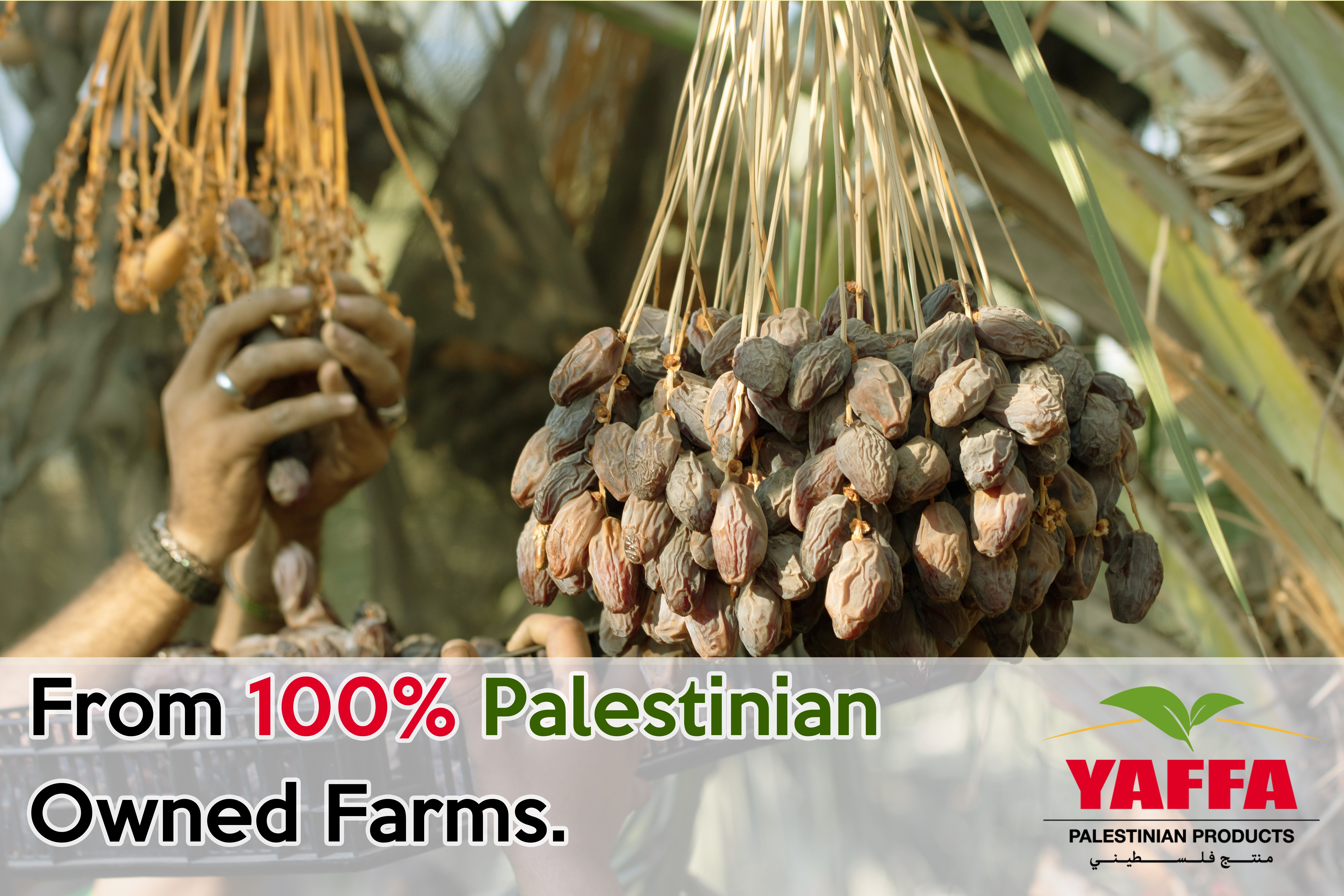 Palestinian Farms